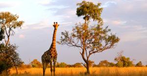 lr-south-africa-park
