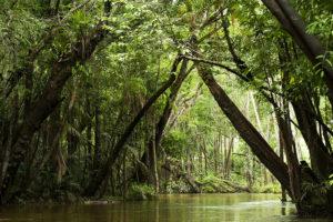 Amazzonia-AP